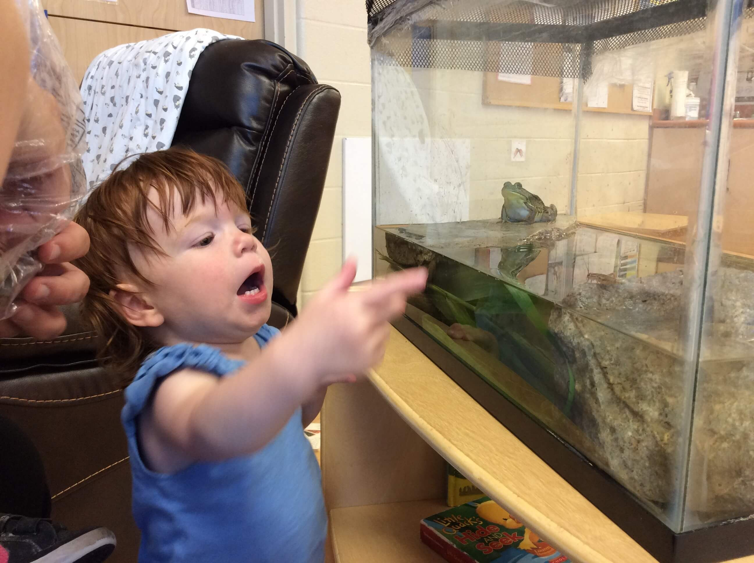 infant looking at a frog tank